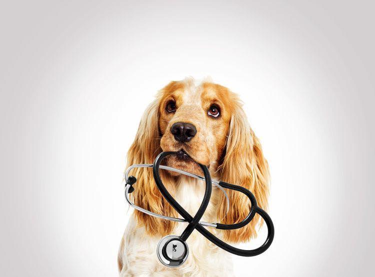 Добровільне медичне страхування